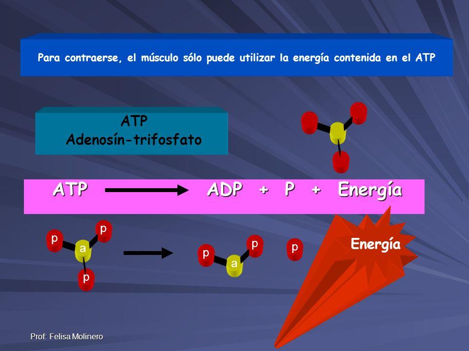 ATP ADP + P + Energía ATP Adenosín-trifosfato Energía p p p a a
