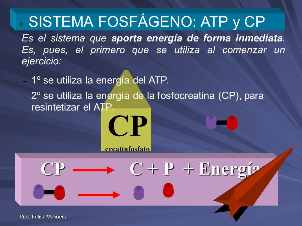 CP CP C + P + Energía SISTEMA FOSFÁGENO: ATP y CP