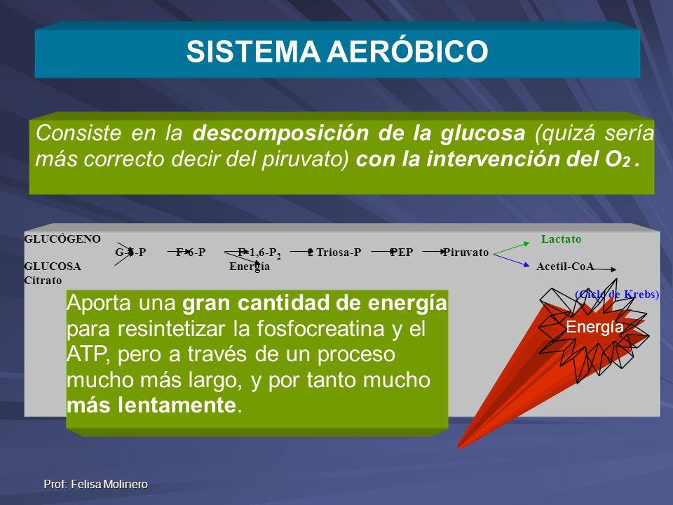 SISTEMA AERÓBICO Consiste en la descomposición de la glucosa (quizá sería más correcto decir del piruvato) con la intervención del O2 .