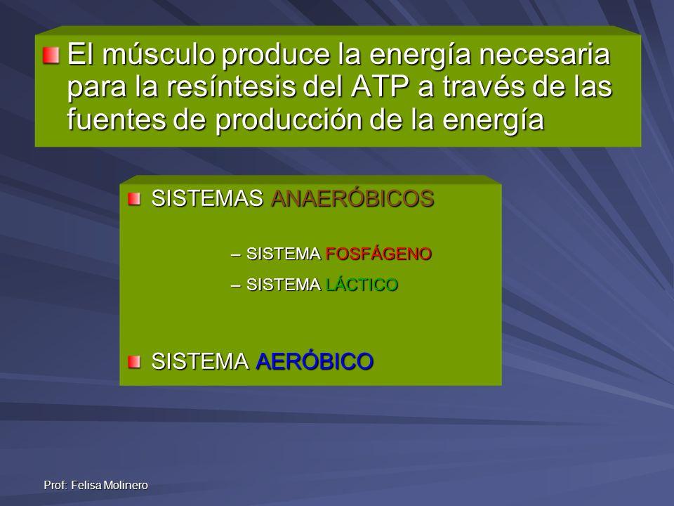 El músculo produce la energía necesaria para la resíntesis del ATP a través de las fuentes de producción de la energía