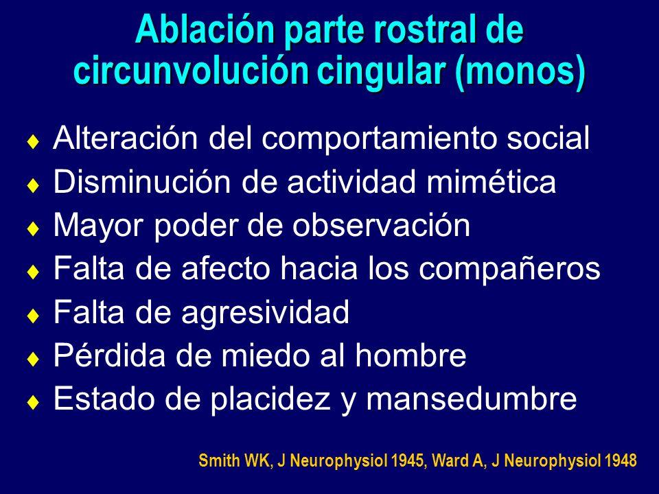 Ablación parte rostral de circunvolución cingular (monos)