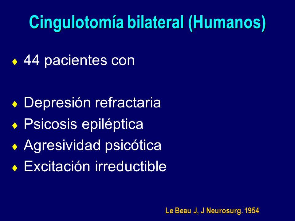 Cingulotomía bilateral (Humanos)
