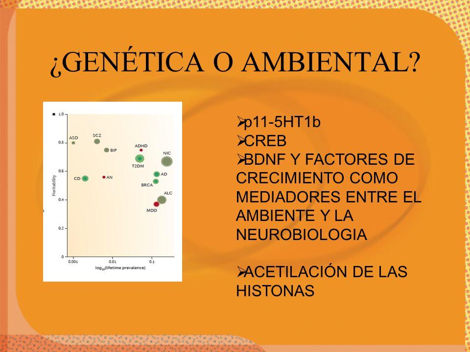 ¿GENÉTICA O AMBIENTAL p11-5HT1b CREB