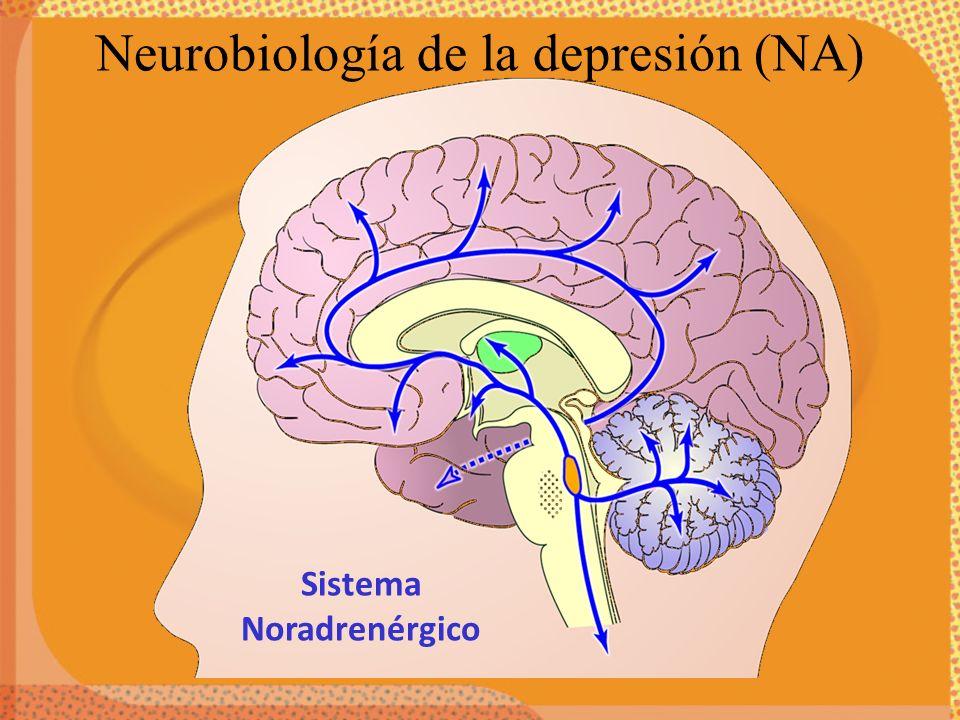 Neurobiología de la depresión (NA)