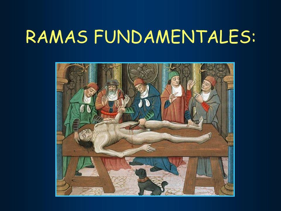 RAMAS FUNDAMENTALES: