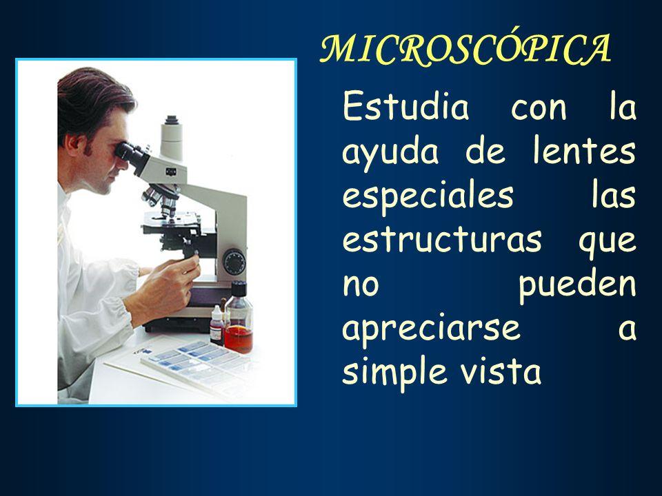MICROSCÓPICA Estudia con la ayuda de lentes especiales las estructuras que no pueden apreciarse a simple vista.