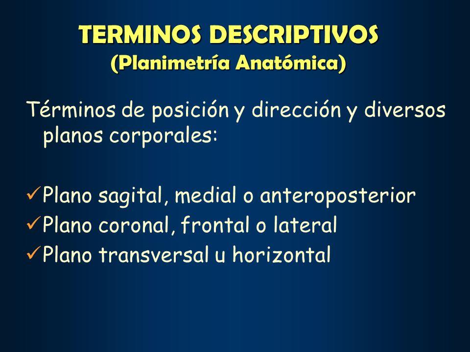 TERMINOS DESCRIPTIVOS (Planimetría Anatómica)
