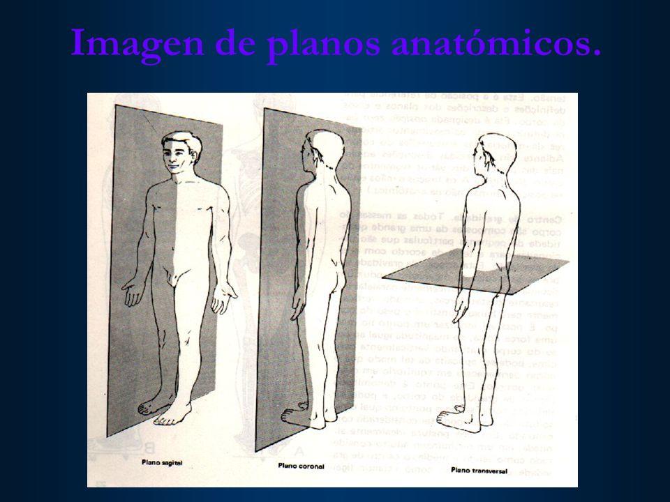 Imagen de planos anatómicos.
