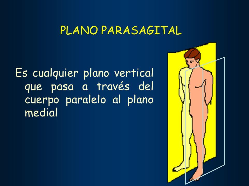 PLANO PARASAGITAL Es cualquier plano vertical que pasa a través del cuerpo paralelo al plano medial