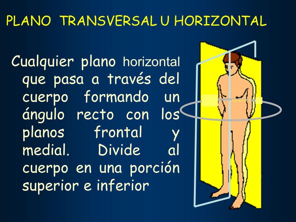 PLANO TRANSVERSAL U HORIZONTAL