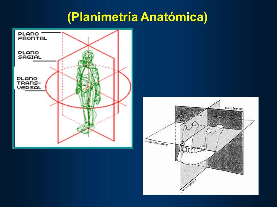 (Planimetría Anatómica)