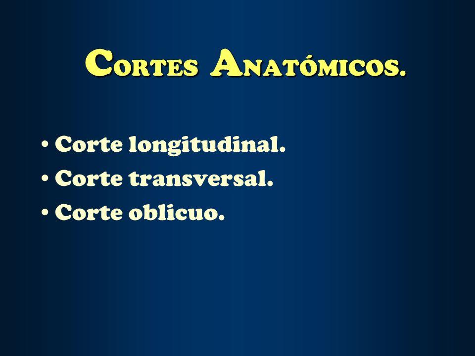 CORTES ANATÓMICOS. Corte longitudinal. Corte transversal.