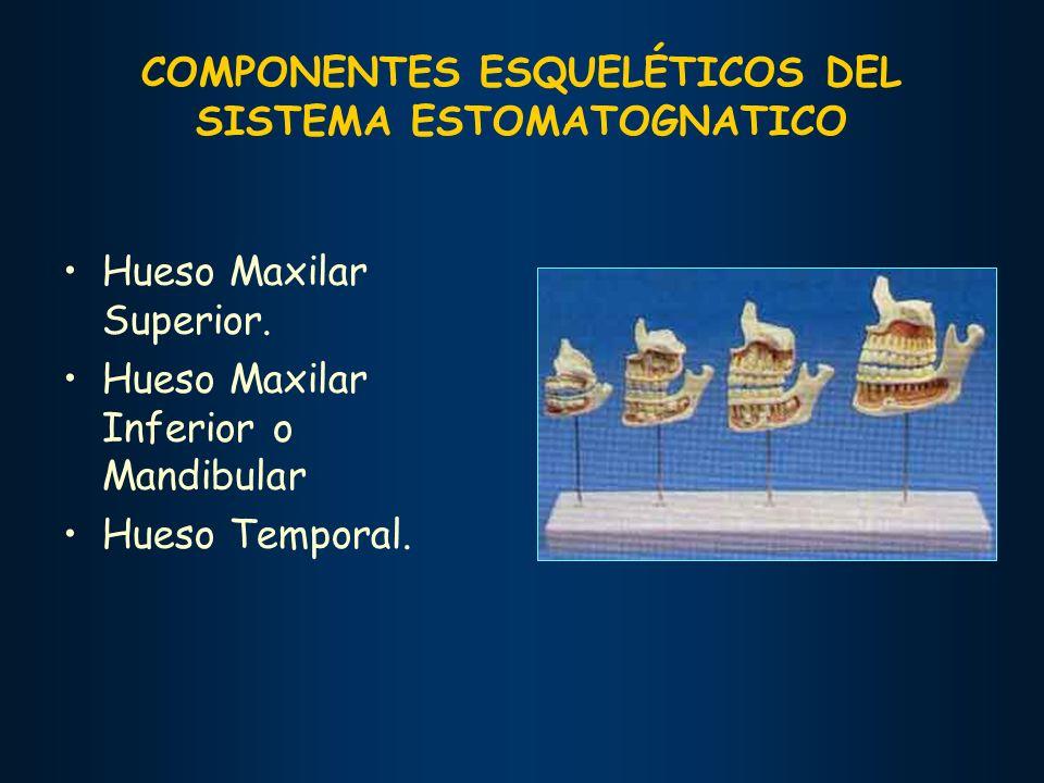 COMPONENTES ESQUELÉTICOS DEL SISTEMA ESTOMATOGNATICO