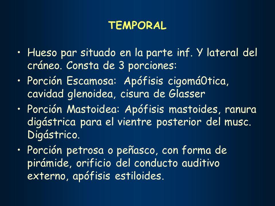 TEMPORAL Hueso par situado en la parte inf. Y lateral del cráneo. Consta de 3 porciones:
