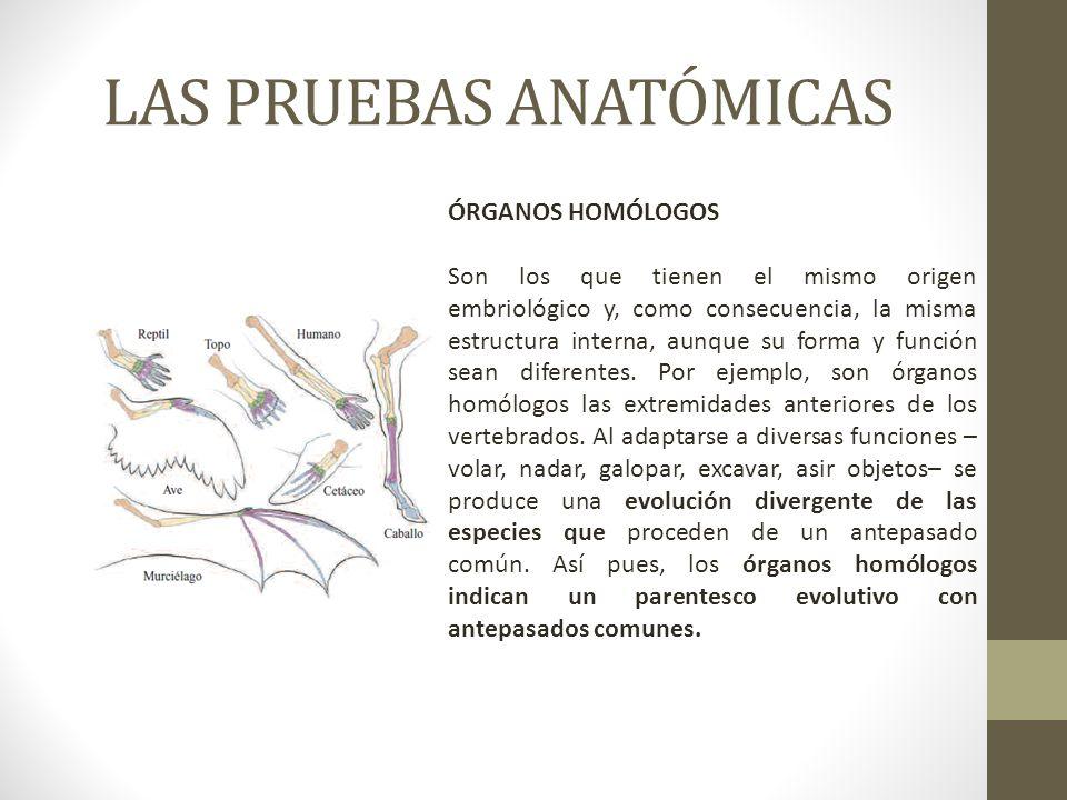 Magnífico Definición Del Origen De La Anatomía Elaboración ...