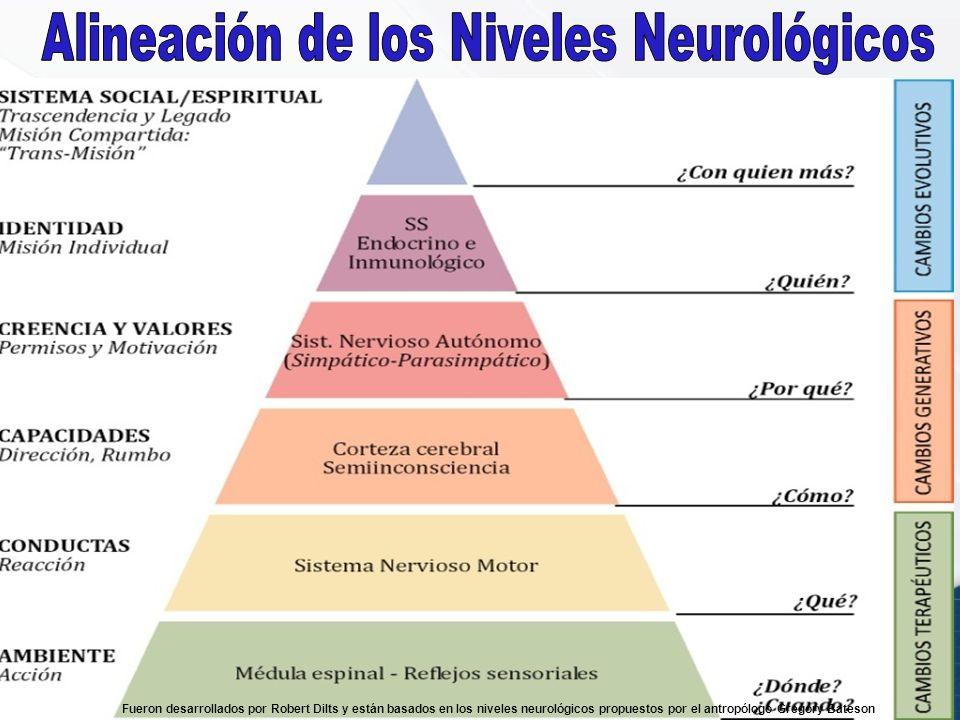 Alineación de los Niveles Neurológicos