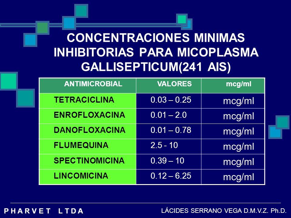 CONCENTRACIONES MINIMAS INHIBITORIAS PARA MICOPLASMA GALLISEPTICUM(241 AIS)