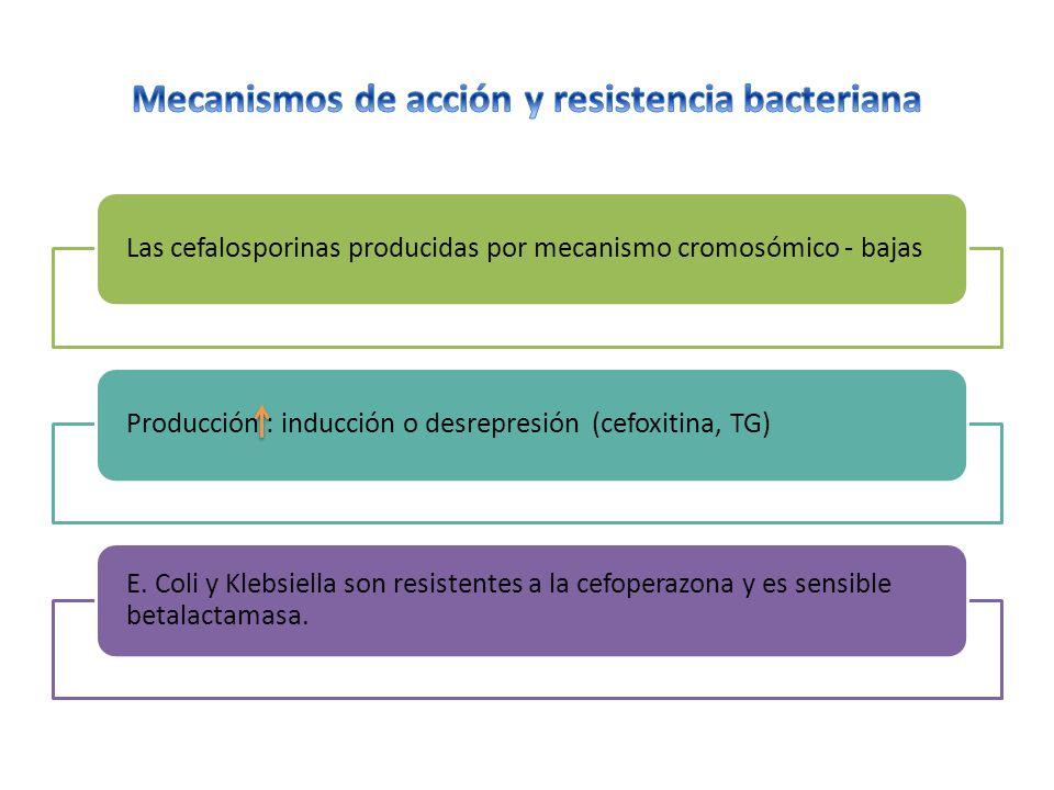 Mecanismos de acción y resistencia bacteriana