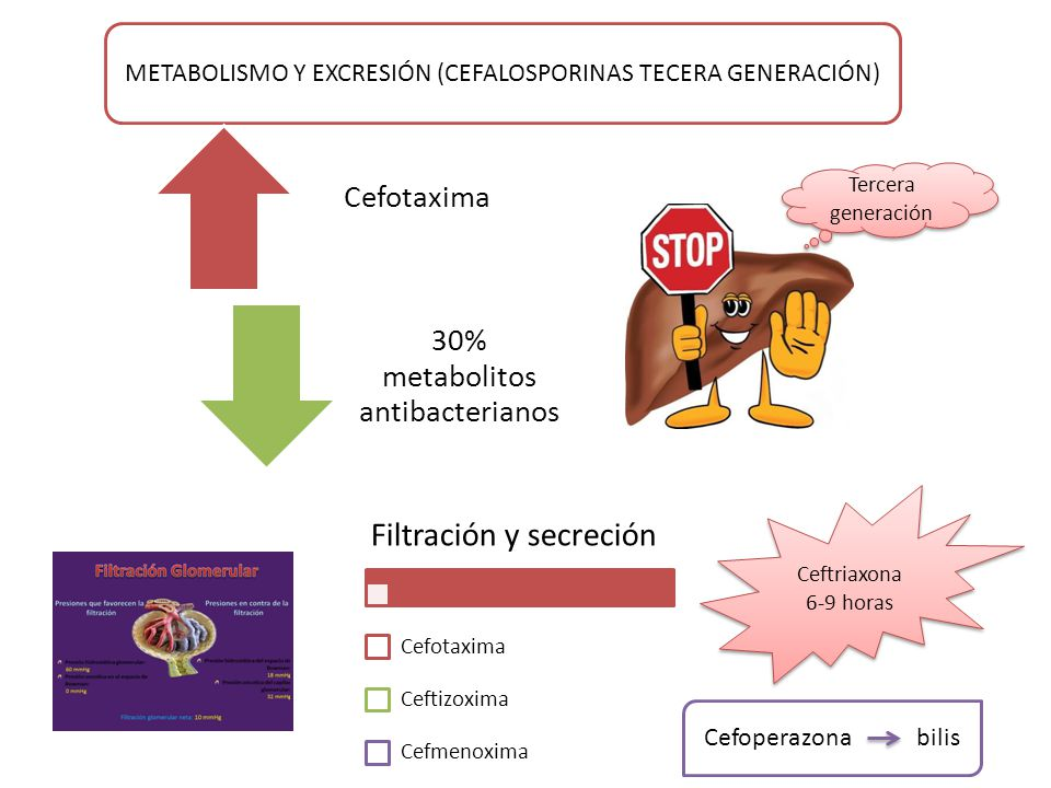 Filtración y secreción