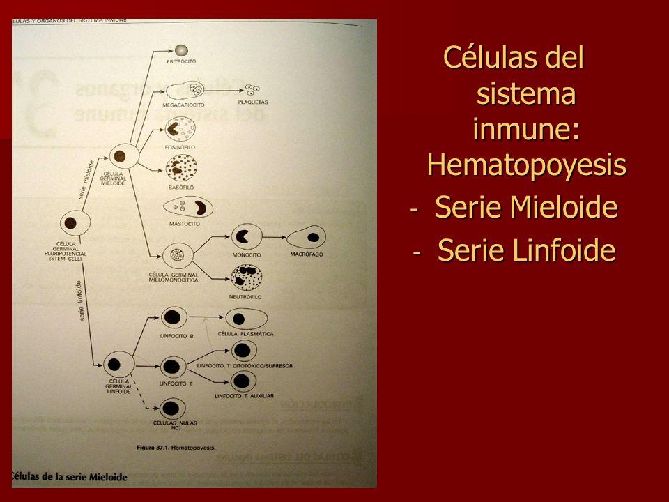 Células del sistema inmune: Hematopoyesis