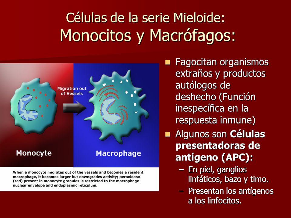 Células de la serie Mieloide: Monocitos y Macrófagos: