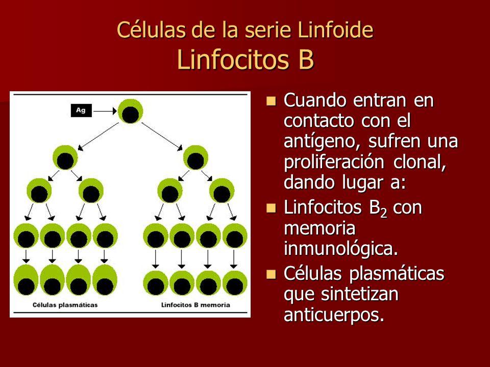 Células de la serie Linfoide Linfocitos B