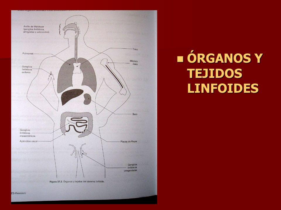 ÓRGANOS Y TEJIDOS LINFOIDES