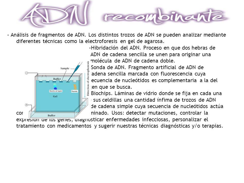 - Análisis de fragmentos de ADN