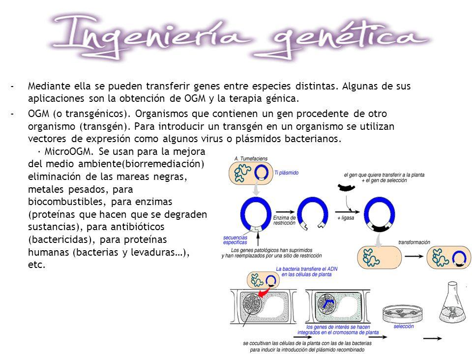 Mediante ella se pueden transferir genes entre especies distintas