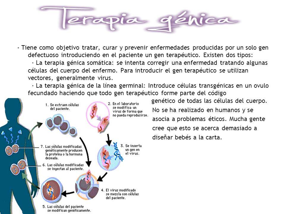 - Tiene como objetivo tratar, curar y prevenir enfermedades producidas por un solo gen defectuoso introduciendo en el paciente un gen terapéutico. Existen dos tipos: · La terapia génica somática: se intenta corregir una enfermedad tratando algunas células del cuerpo del enfermo. Para introducir el gen terapéutico se utilizan vectores, generalmente virus. · La terapia génica de la línea germinal: Introduce células transgénicas en un ovulo fecundado haciendo que todo gen terapéutico forme parte del código genético de todas las células del cuerpo.