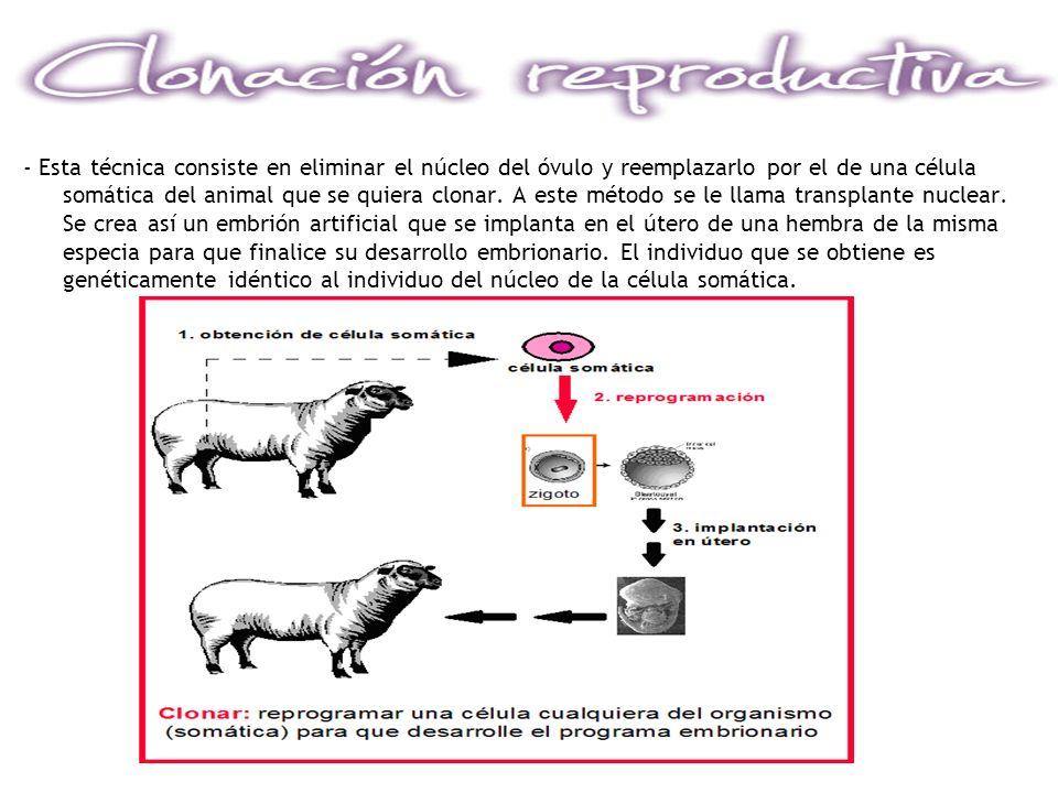 - Esta técnica consiste en eliminar el núcleo del óvulo y reemplazarlo por el de una célula somática del animal que se quiera clonar.