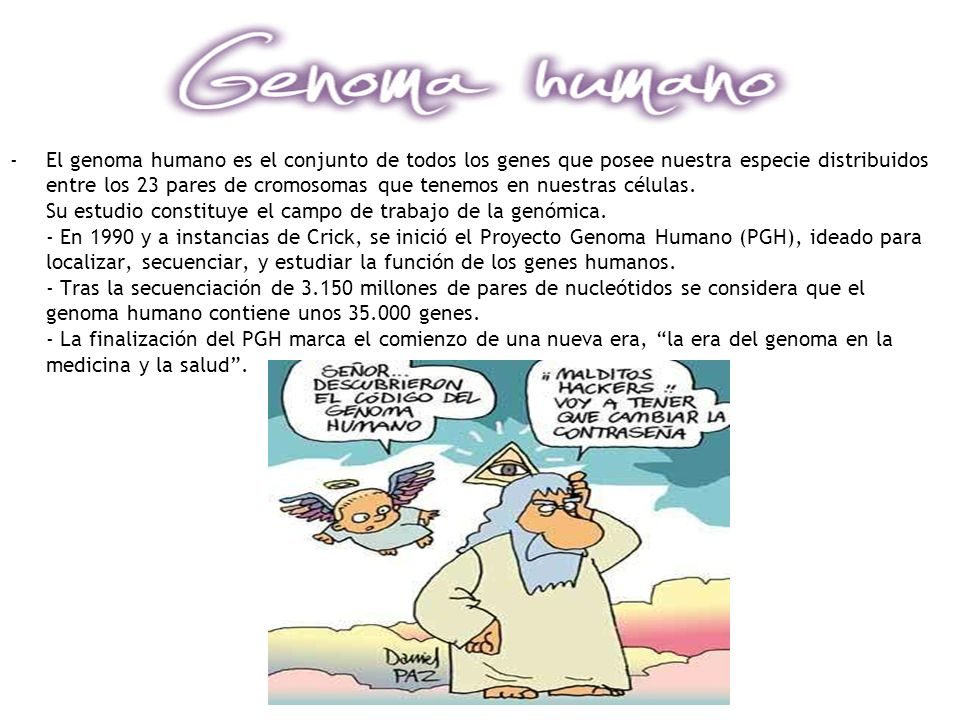 El genoma humano es el conjunto de todos los genes que posee nuestra especie distribuidos entre los 23 pares de cromosomas que tenemos en nuestras células.