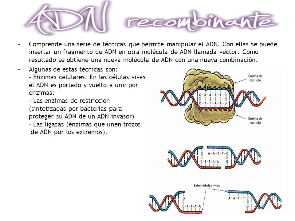 Comprende una serie de técnicas que permite manipular el ADN