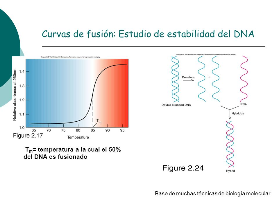 Curvas de fusión: Estudio de estabilidad del DNA