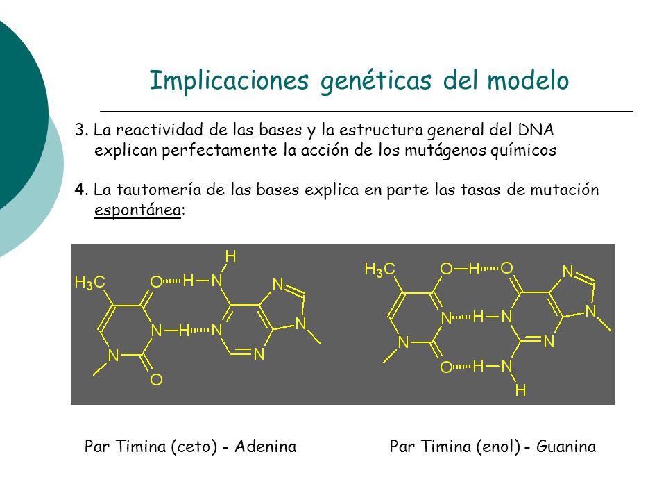 Implicaciones genéticas del modelo