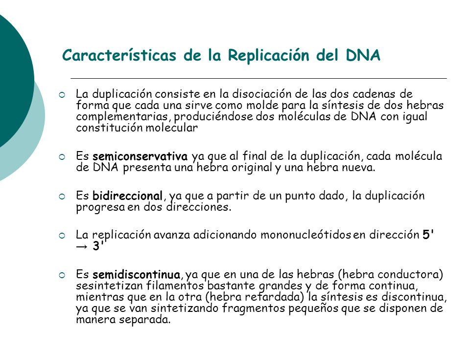 Características de la Replicación del DNA