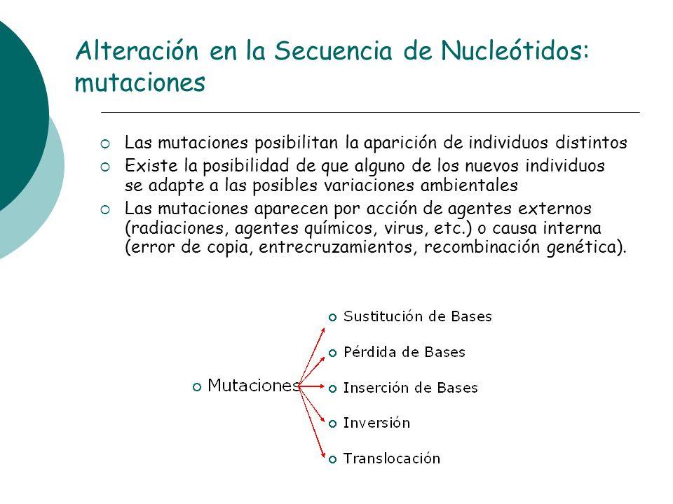 Alteración en la Secuencia de Nucleótidos: mutaciones