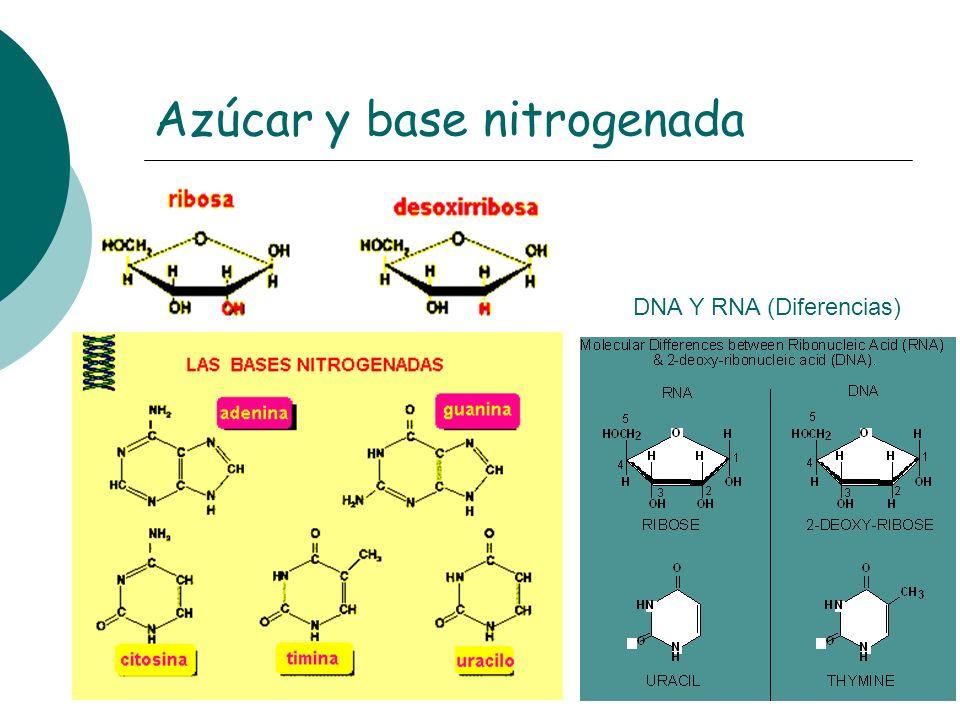 Azúcar y base nitrogenada