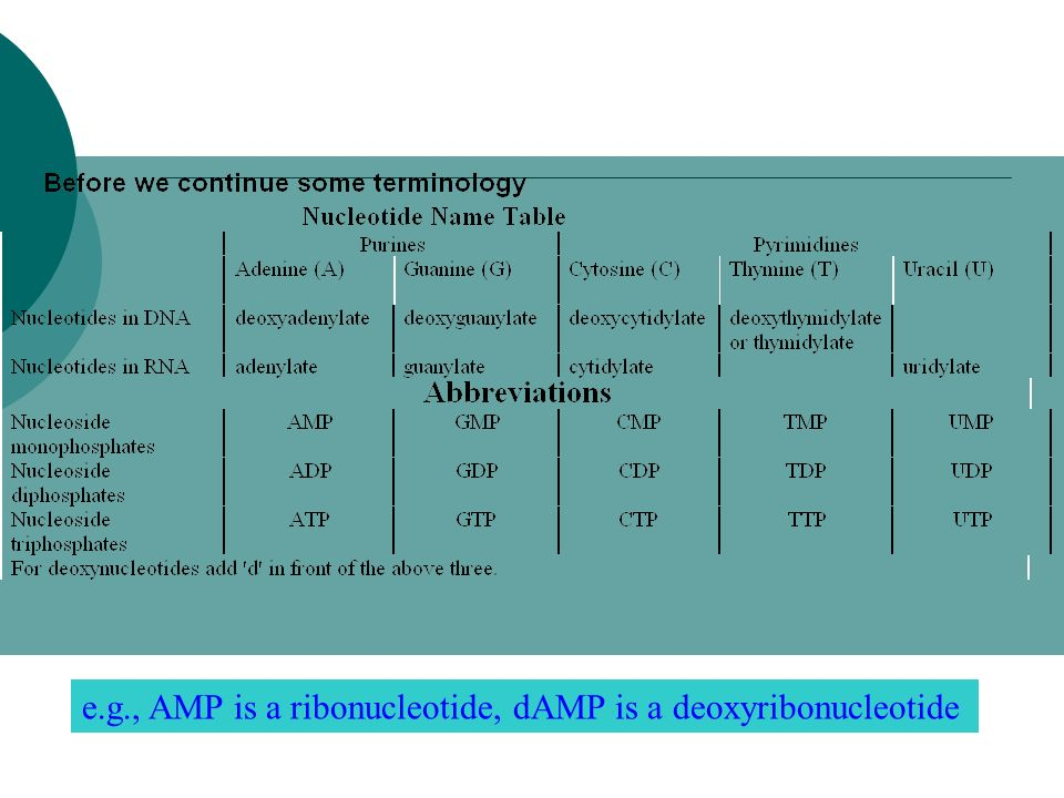 e.g., AMP is a ribonucleotide, dAMP is a deoxyribonucleotide