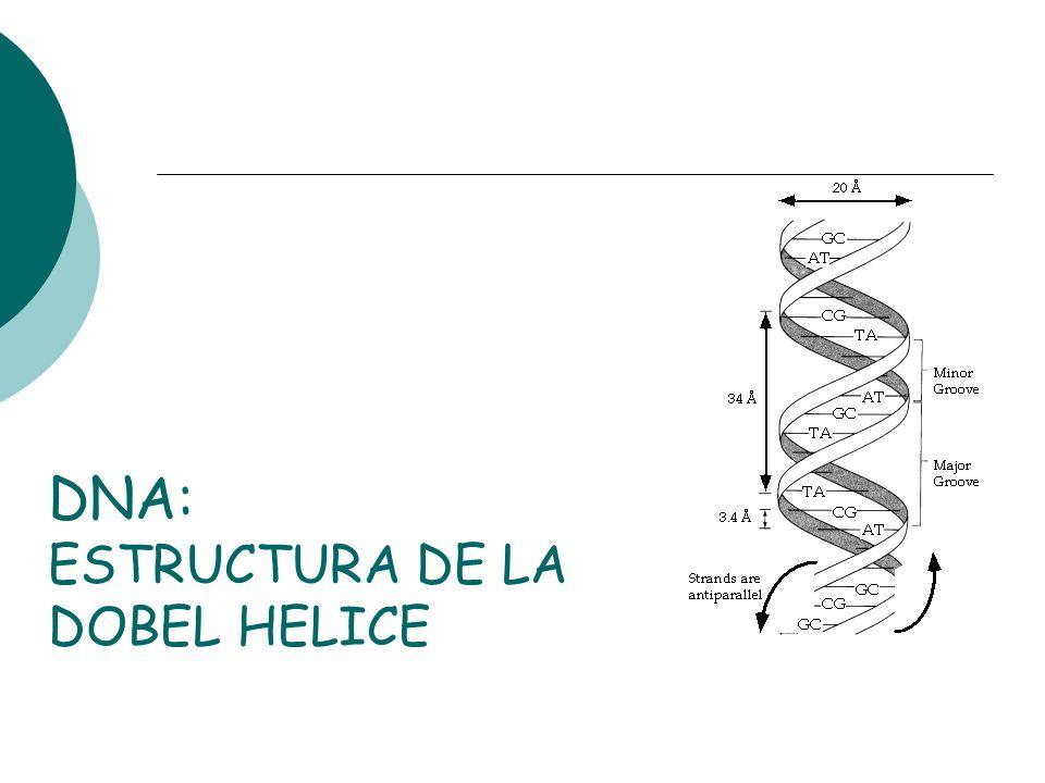 DNA: ESTRUCTURA DE LA DOBEL HELICE