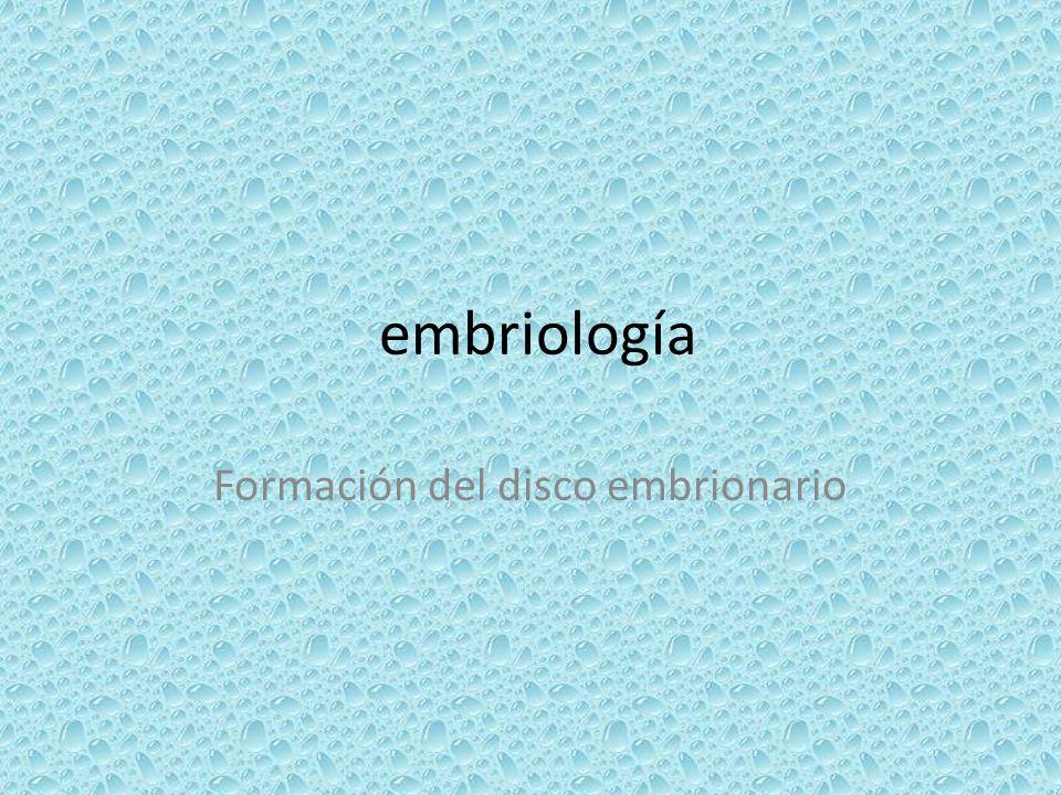 Formación del disco embrionario