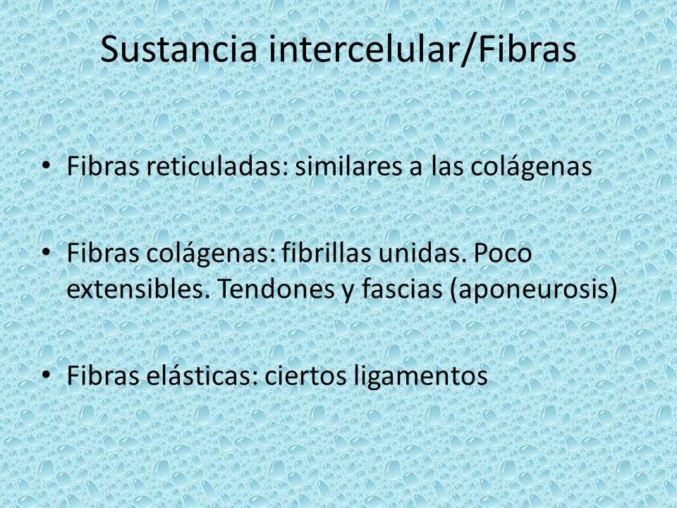 Sustancia intercelular/Fibras