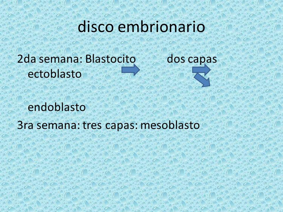 disco embrionario 2da semana: Blastocito dos capas ectoblasto endoblasto 3ra semana: tres capas: mesoblasto