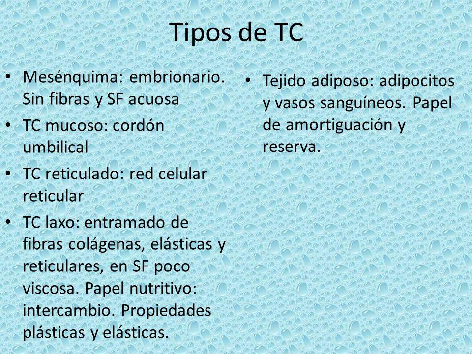 Tipos de TC Mesénquima: embrionario. Sin fibras y SF acuosa