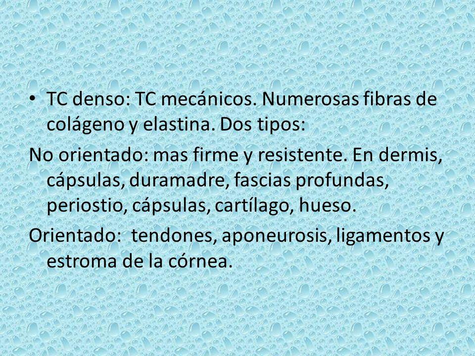 TC denso: TC mecánicos. Numerosas fibras de colágeno y elastina