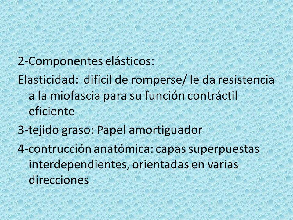 2-Componentes elásticos: Elasticidad: difícil de romperse/ le da resistencia a la miofascia para su función contráctil eficiente 3-tejido graso: Papel amortiguador 4-contrucción anatómica: capas superpuestas interdependientes, orientadas en varias direcciones
