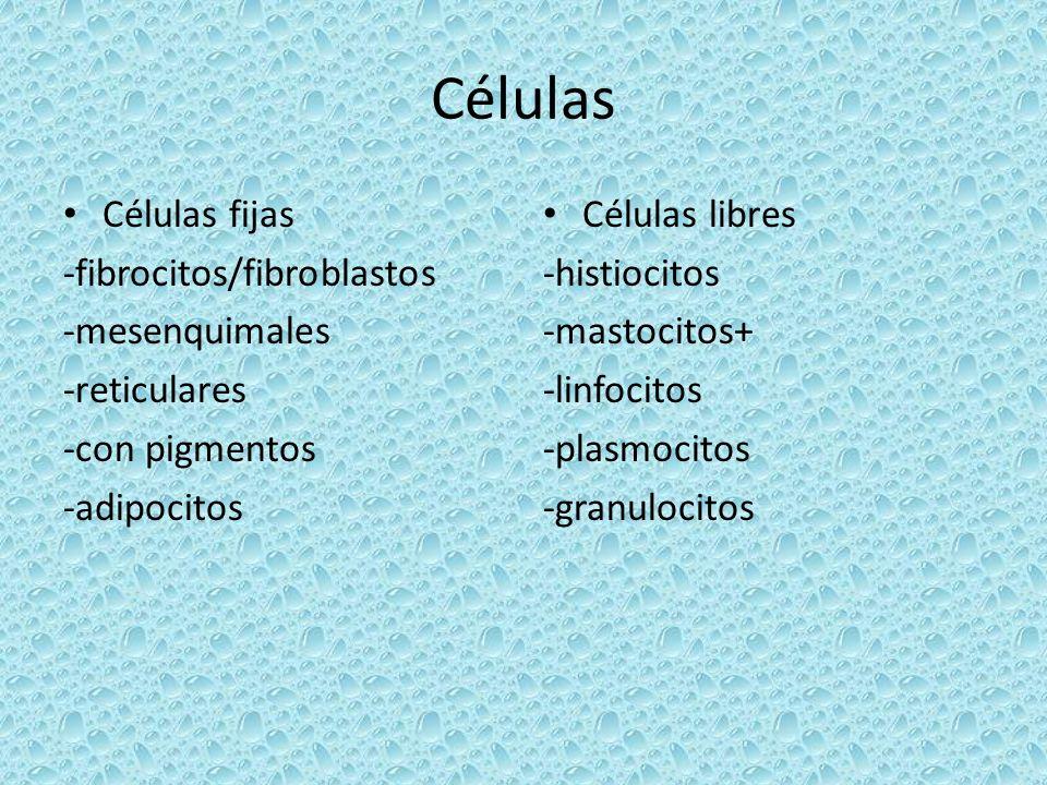 Células Células fijas -fibrocitos/fibroblastos -mesenquimales
