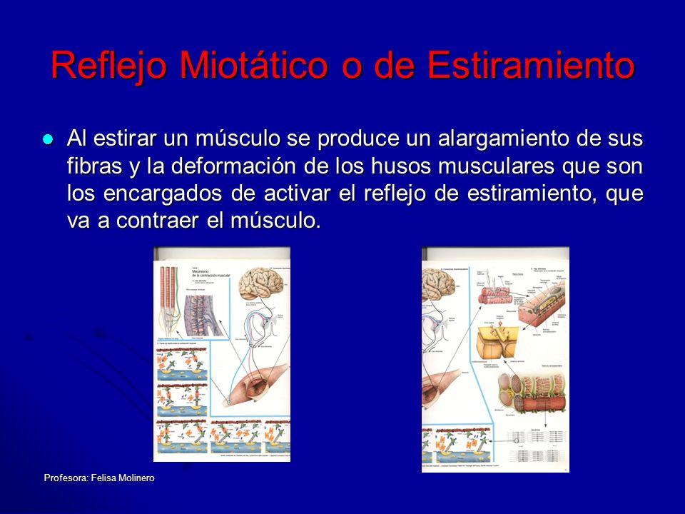 Reflejo Miotático o de Estiramiento