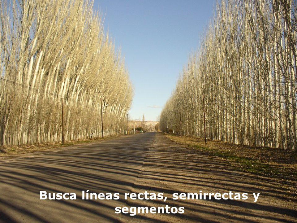 Busca líneas rectas, semirrectas y segmentos