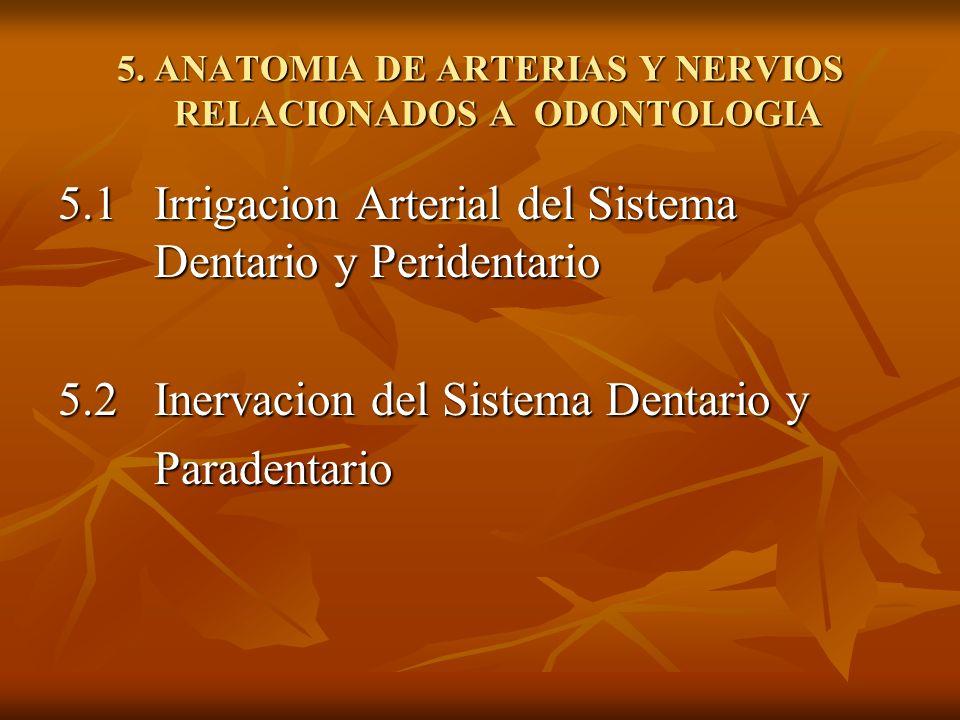 5. ANATOMIA DE ARTERIAS Y NERVIOS RELACIONADOS A ODONTOLOGIA
